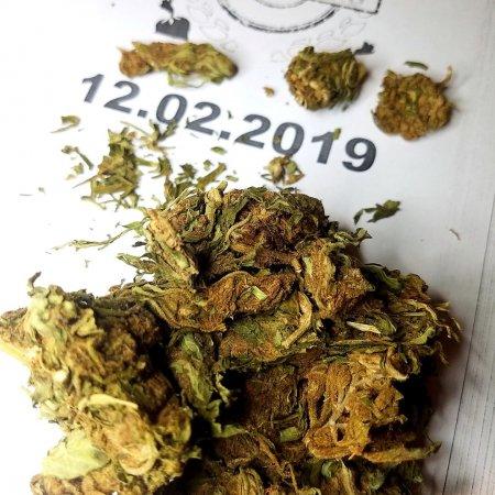 1G Green Poison 1